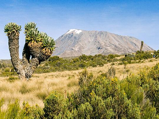 Marangu route Kilimanjaro view