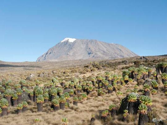 Marangu route trek