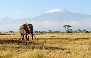 Climbing Kilimanjaro costs