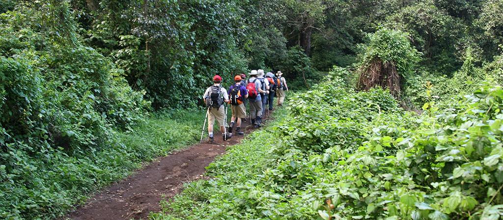 Forest Zone Kilimanjaro Climate
