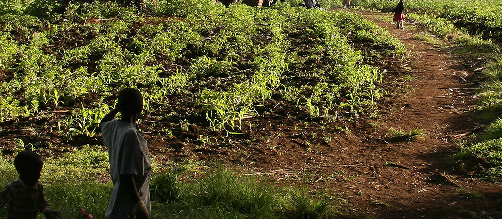 Kilimanjaro Climate Zone Cultivation