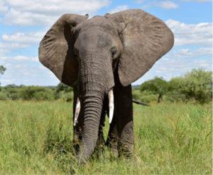 3 Day Tanzania Safari