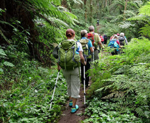 lemosho route Kilimanjaro climb