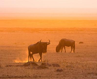 5 day serengeti safari