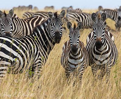 5 day tanzania safari