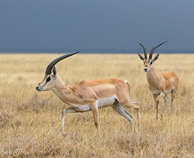 tanzania-safari-tarangire