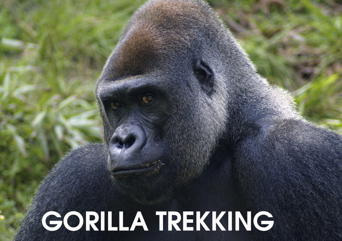 Gorilla Trekking after Kilimanjaro