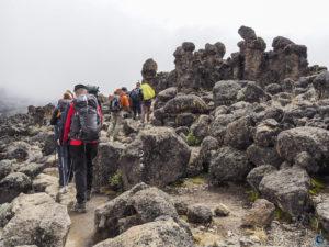 Kilimanjaro walking